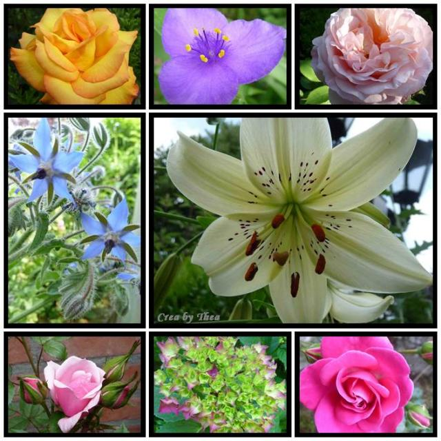 bloemen collage.jpg